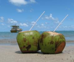 Como vender água de coco e ganhar um bom dinheiro