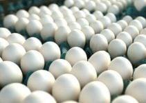 Fornecedores de ovos – Onde comprar ovo para revender